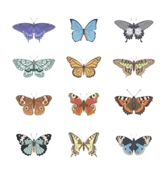 Set of realistic tenderness butterfly vector