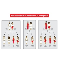 The mechanism of inheritance of hemophilia vector