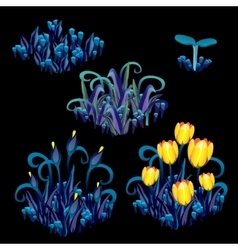 Yellow tulips with blue grass stages growth vector