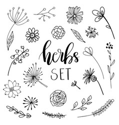 floral and herbal set vector image vector image
