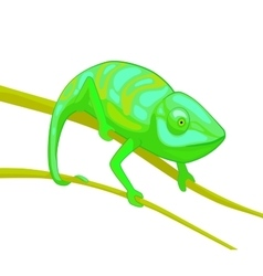 Green chameleon on brown branch vector