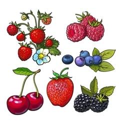 Strawberry blueberry blackberry cherry raspberry vector