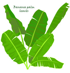 Branch tropical palm banana leaves realistic vector