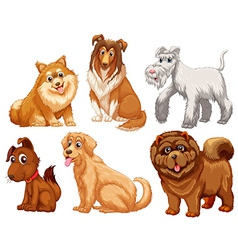 Different species of dogs vector image