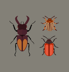 Insect icon flat isolated nature flying bugs vector