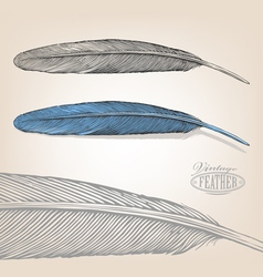 Feather in engraving style vector