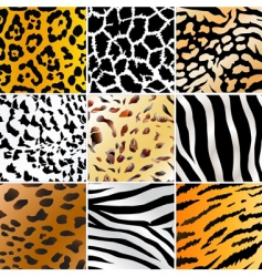 Wild patterns vector