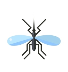 Anopheles mosquito vector