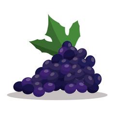 grape nutrition healthy image vector image