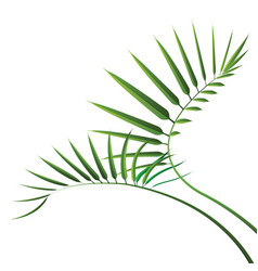 green cycad leaf isolated on white background vector image