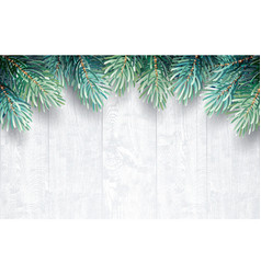 fir branches with white wooden texture vector image vector image