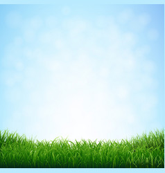grass with blue sky vector image vector image