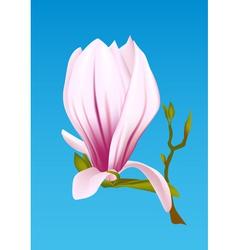 magnolia plant vector image vector image