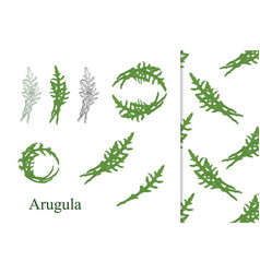 Hand drawn arugula vector