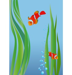 anemone fish vector image