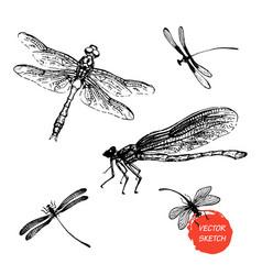 dragonfly sketch set design vector image