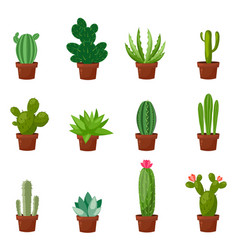 Set of desert or room green cactus flat and vector
