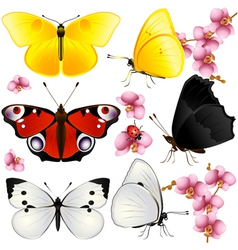 Butterflies set with orchids small vector
