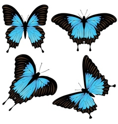 Mountain swallowtail set vector