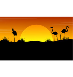 at sunset with flamingo silhouette landscape vector image vector image