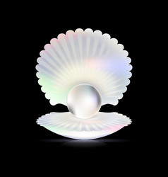 dark and shell vector image