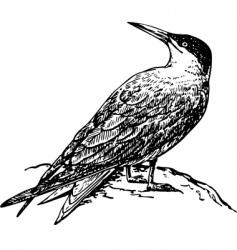 caspian tern vector image vector image