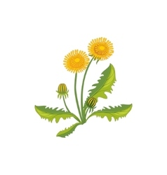 Dandelion Wild Flower Hand Drawn Detailed vector image
