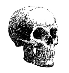 Side view of skull vector