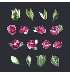 Watecolor Floral Set of Design Elements Including vector image vector image