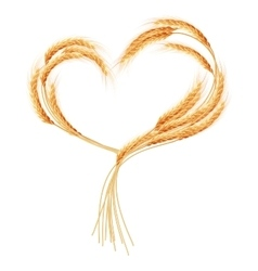 Wheat ears heart isolated on the white eps 10 vector