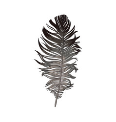 Hand drawn smoth black and grey dove bird feather vector