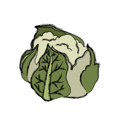 Cauliflower with green leaves nutrition vector