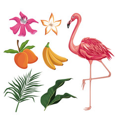 Flamingo mango banana flower leaves nature vector
