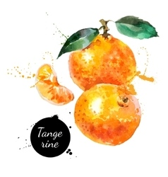 Hand drawn watercolor painting tangerine on white vector image vector image