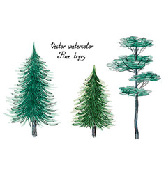 watercolor pine trees vector image