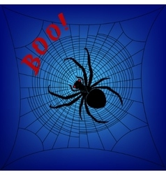 Spider on cobweb vector image
