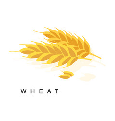 Wheat ear infographic with realistic vector