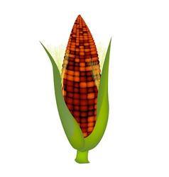 Fresh sweet ears of purple corn with husk and silk vector