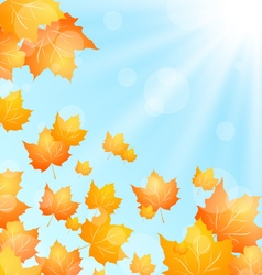 Autumn background with flying maple vector
