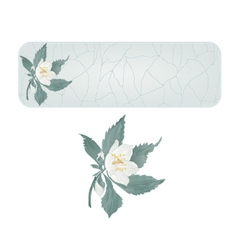 Banner spring flower jasmine cracks vector