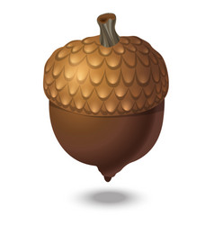 Brown acorn isolated on white background close up vector