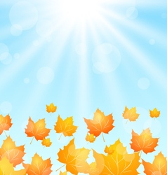 Autumn flying maples in blue sky vector