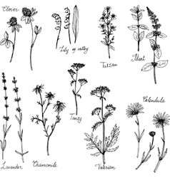 Hand drawn medical plants vector