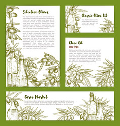 Olive oil product poster sketch templates vector