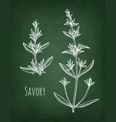 Savory chalk sketch vector