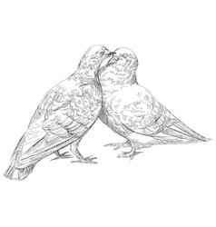 lovers pigeons kissing in vector image