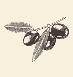olive branch olive tree branches vintage vector image