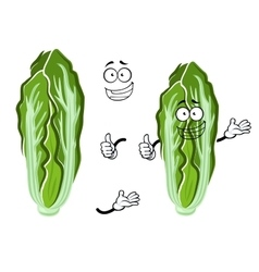 Cartoon happy chinese cabbage vegetable vector