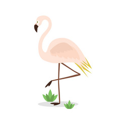 beautiful abstract single pink flamingo standing vector image