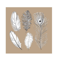 Hand drawn set of various black and white bird vector
